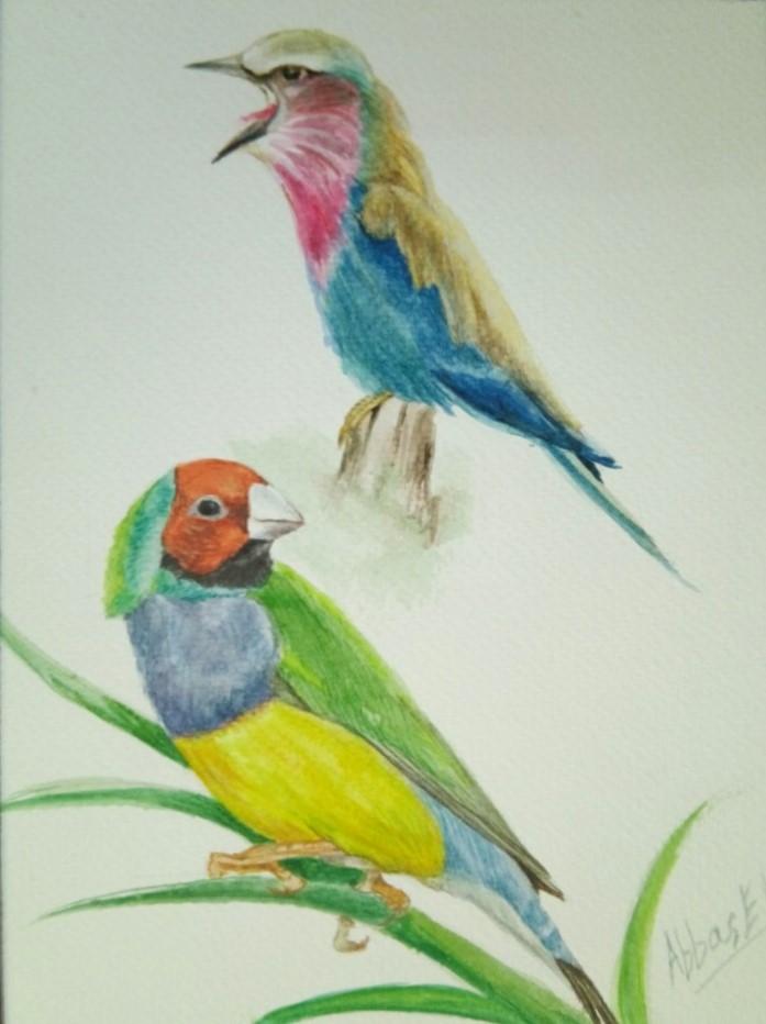 Multi-coloured birds in song