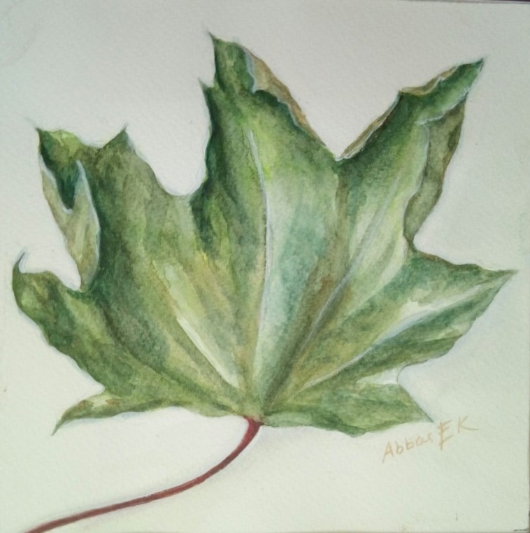 Nature study of a maple leaf