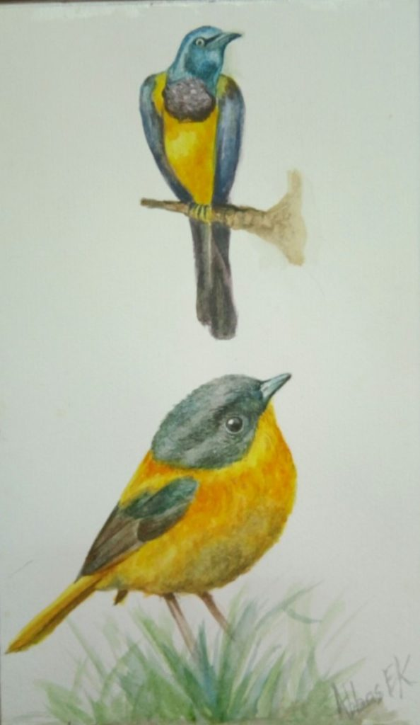 Nature study of two yellow birds
