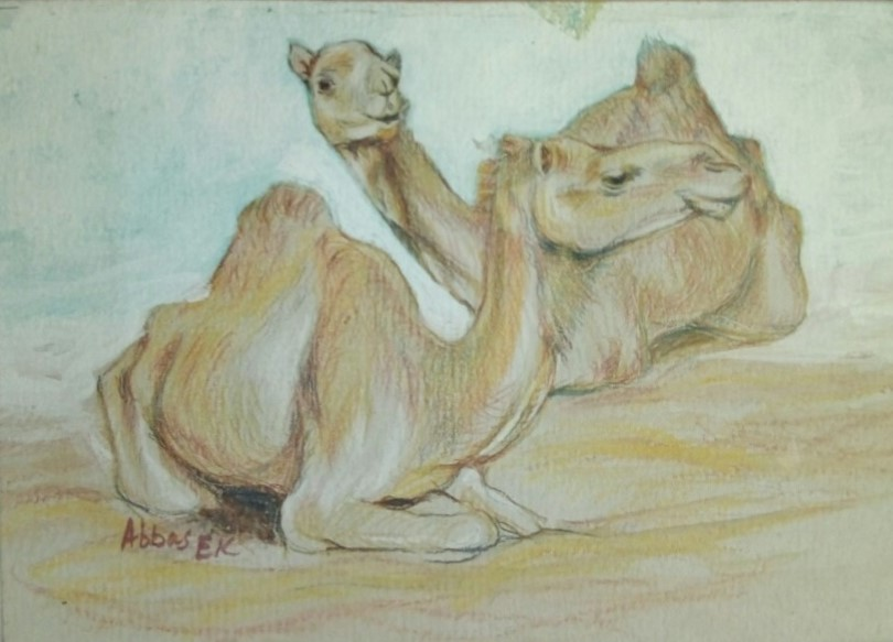 Crayon pencil study of two squatting camels